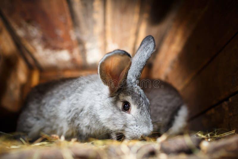 Gullig kanin som poppar ut ur en hutch fotografering för bildbyråer