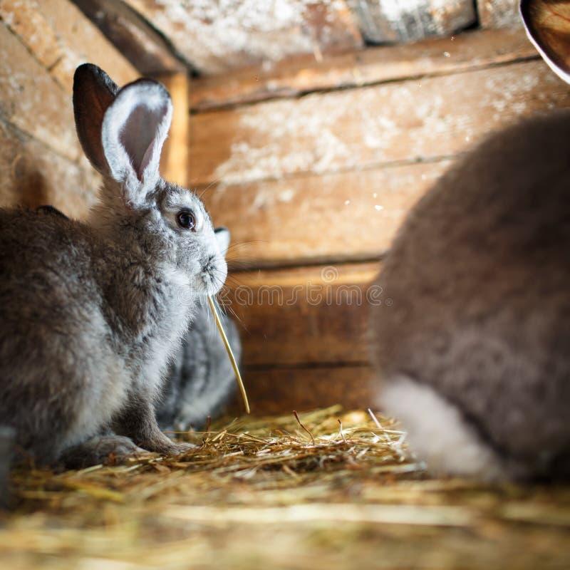 Gullig kanin som poppar ut ur en hutch royaltyfri foto
