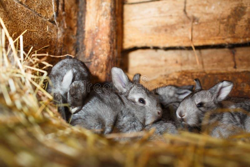 Gullig kanin som poppar ut ur en hutch arkivbilder