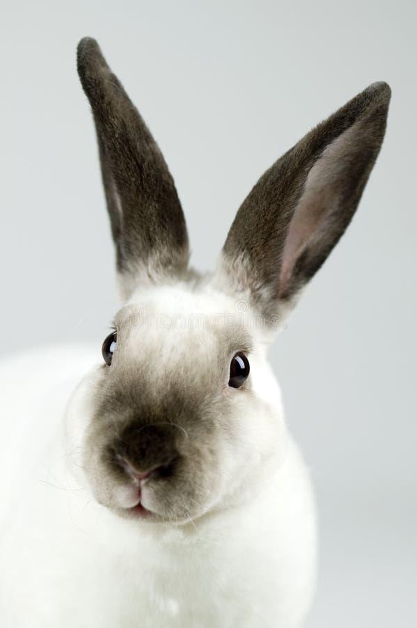 gullig kaninwhite arkivbilder