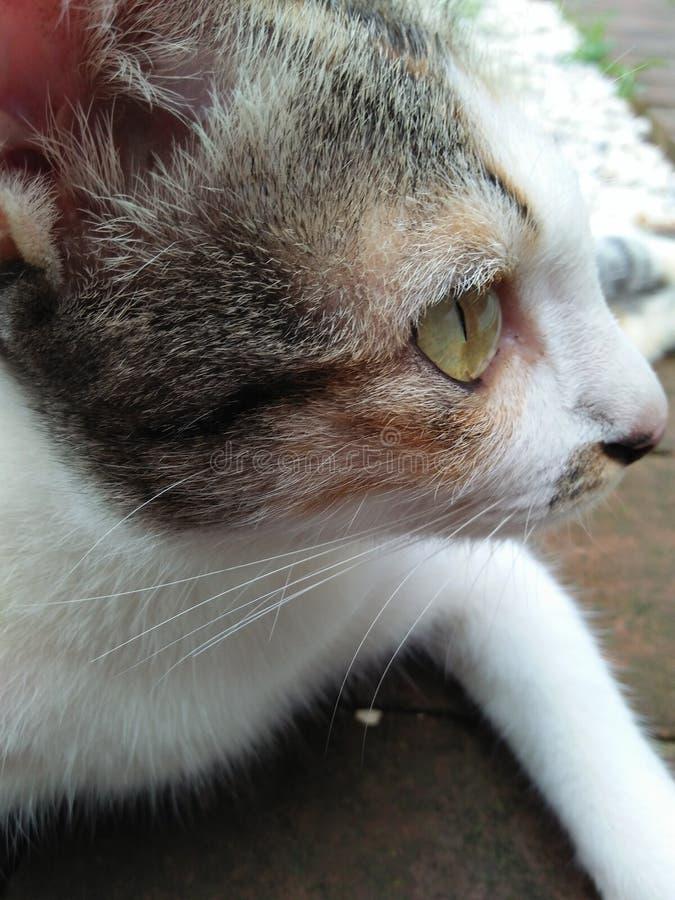 gullig katt fotografering för bildbyråer