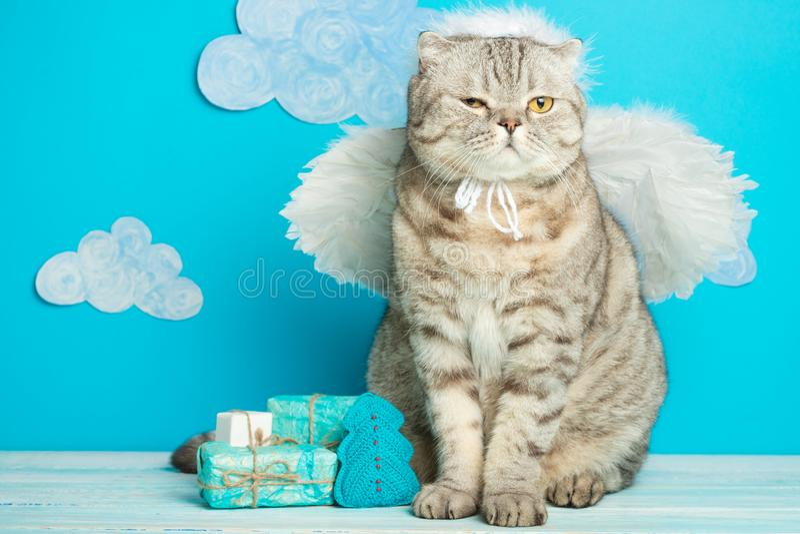 Gullig katt för julängel, med vingar och gåvor för det nya året royaltyfri fotografi
