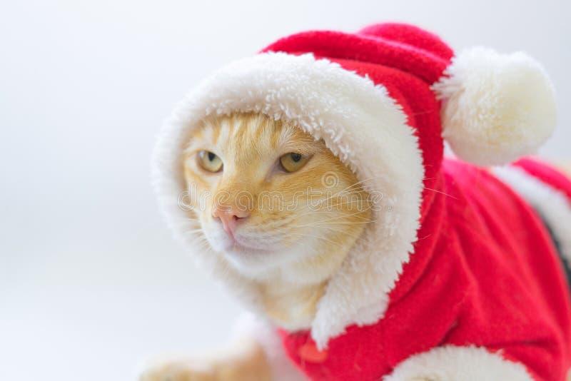 Gullig katt i den Santa Claus dräkten arkivbild