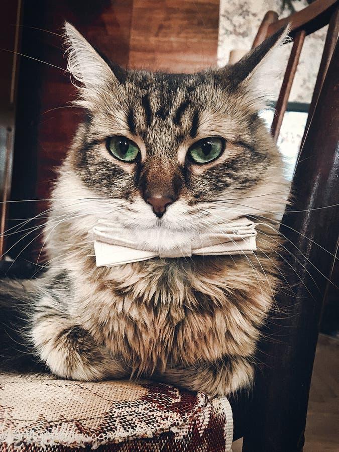 Gullig katt i flugasammanträde på trästol Utrymme för text Swe fotografering för bildbyråer