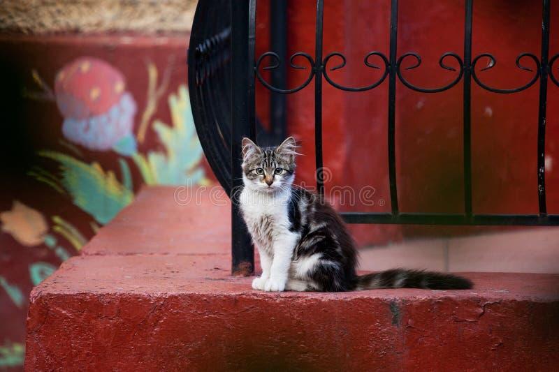 gullig katt little royaltyfri fotografi