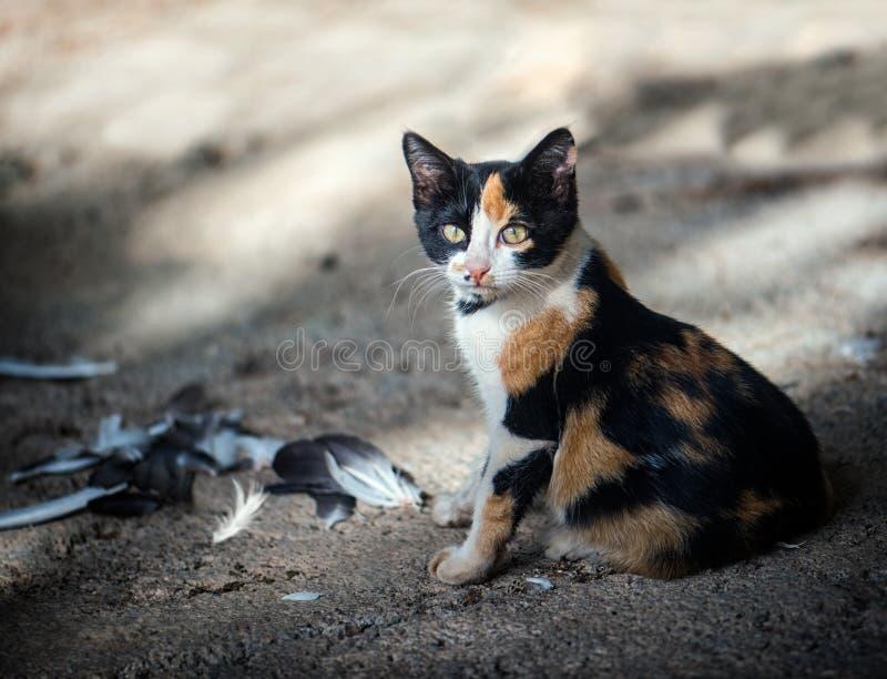 gullig katt little royaltyfri foto