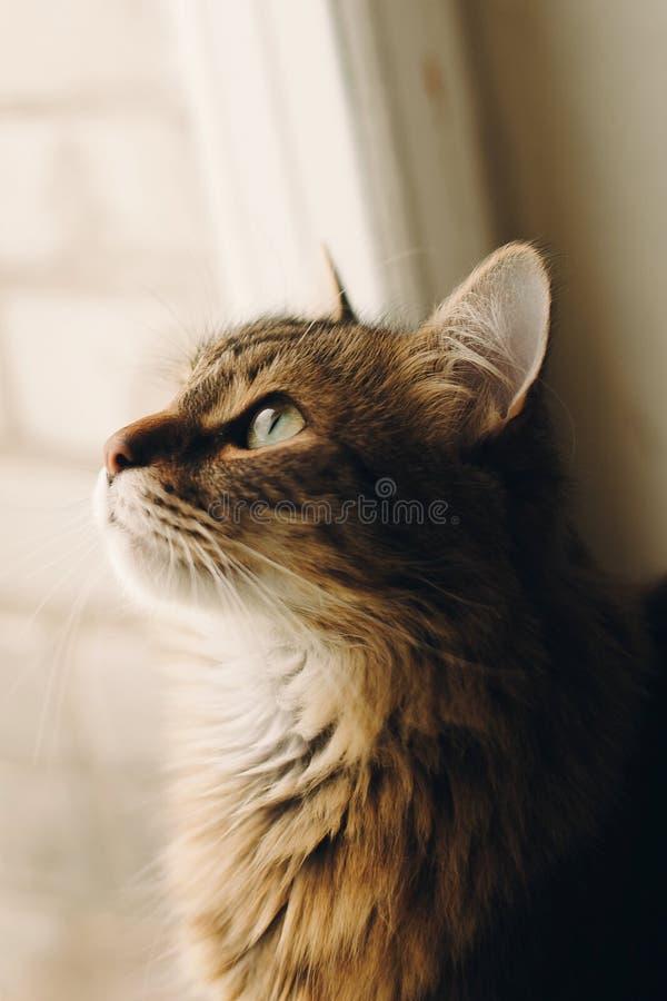 Gullig katt med fantastiska gröna ögon som ser fönsterljus i rum arkivfoton