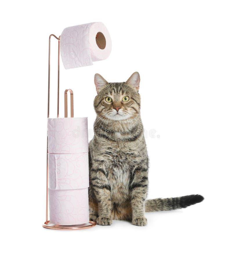 Gullig katt med rullar av toalettpapper royaltyfria bilder