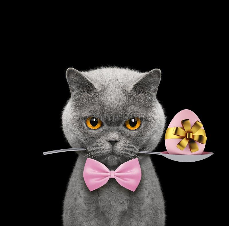 Gullig katt med skeden och det easter ägget Isolerat på svart arkivbild