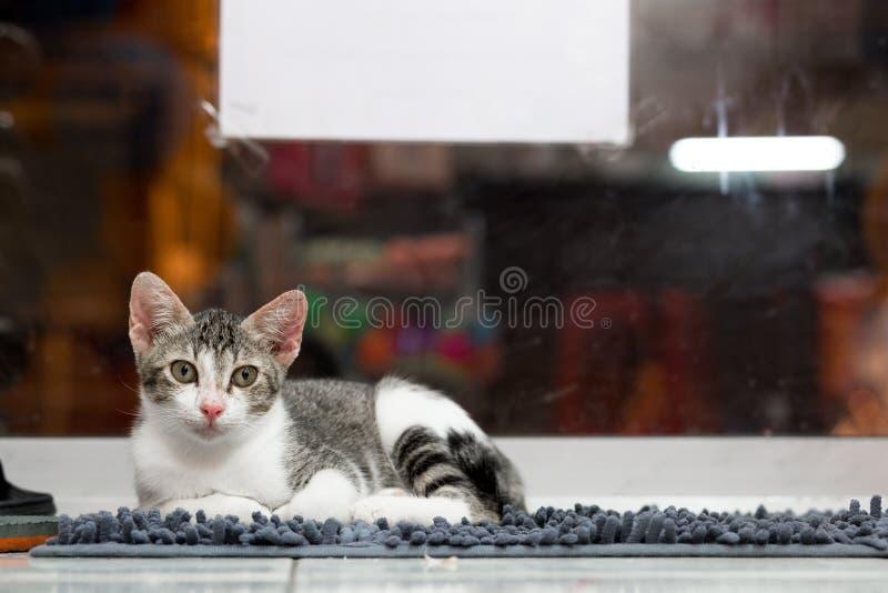 Gullig katt på mattan fotografering för bildbyråer