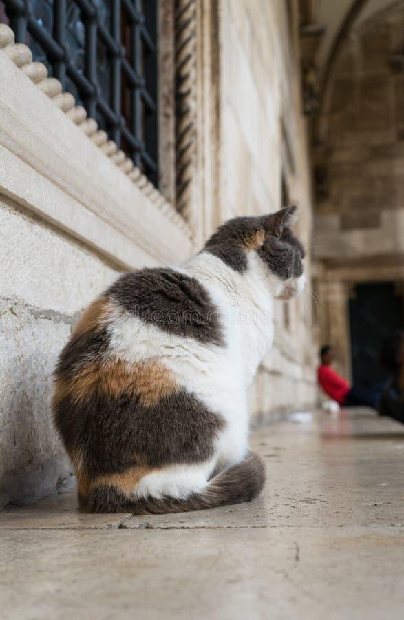 Gullig katt som framme sitter av byggnaderna i den gamla staden av Dubrovnik, Kroatien Ljust rödbrun och svartvit katt som sitter arkivfoton