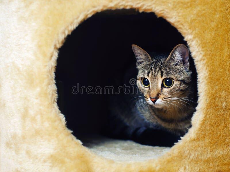 Gullig katt som kikar ut ur hans hus royaltyfri foto