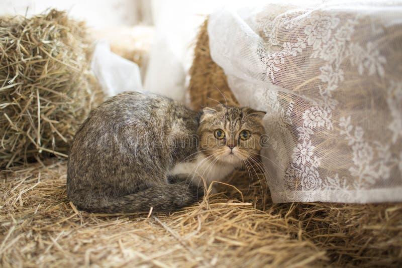 Gullig katt som ligger p? golv royaltyfria bilder