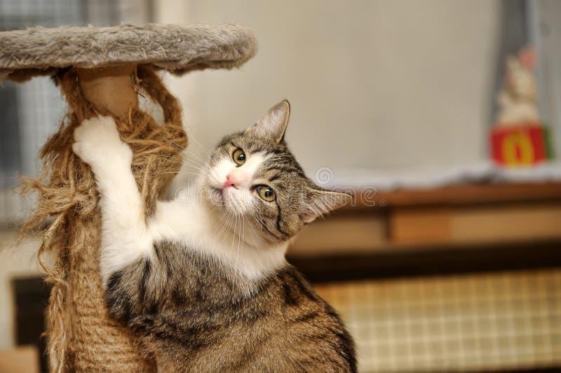 Gullig katt som skrapar en stolpe arkivfoton