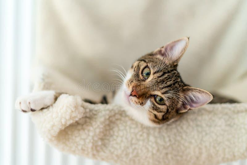 Gullig katt som tar en ta sig en tupplur royaltyfri fotografi