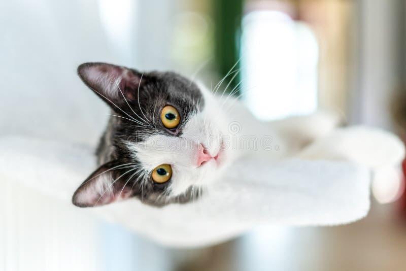 Gullig katt som tar en ta sig en tupplur royaltyfria bilder