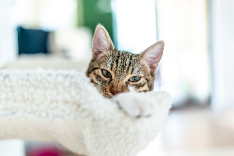 Gullig katt som tar en ta sig en tupplur royaltyfri foto