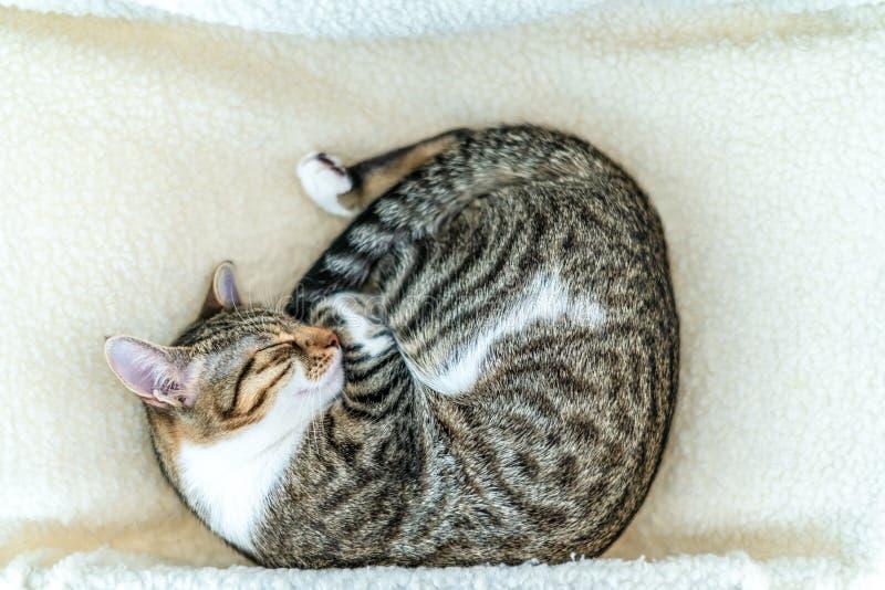 Gullig katt som tar en ta sig en tupplur arkivbild