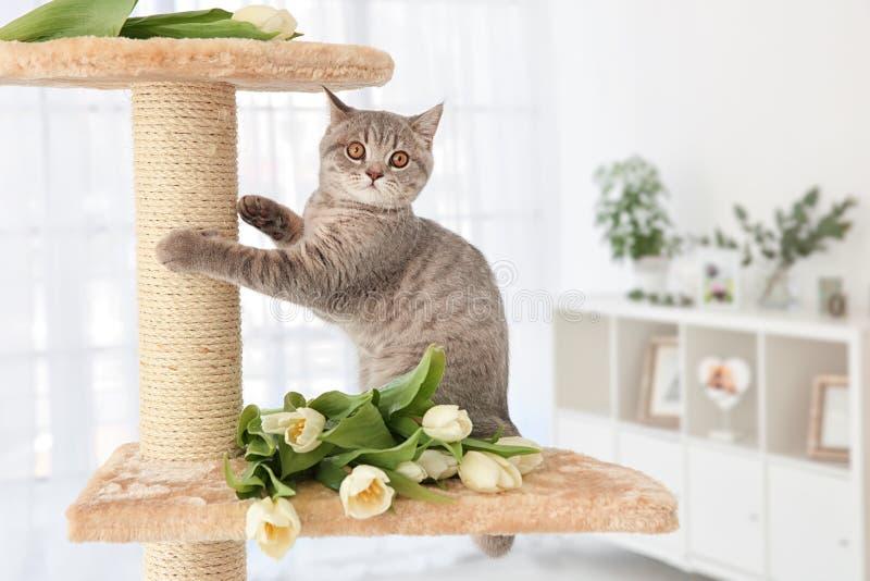 Gullig katt som vässar jordluckrare på träd med tulpan royaltyfri foto