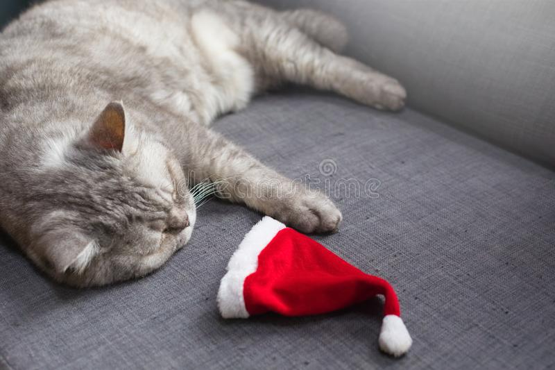 Gullig katt som vilar på soffan med jultomten hatt, afterparty begrepp för jul fotografering för bildbyråer