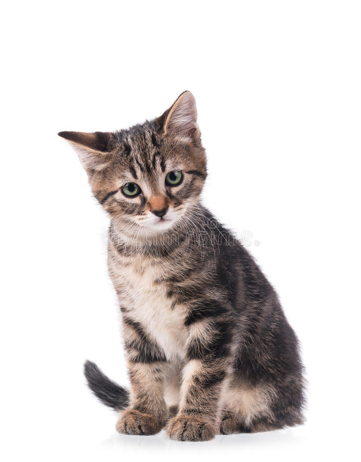gullig kattunge little royaltyfria foton