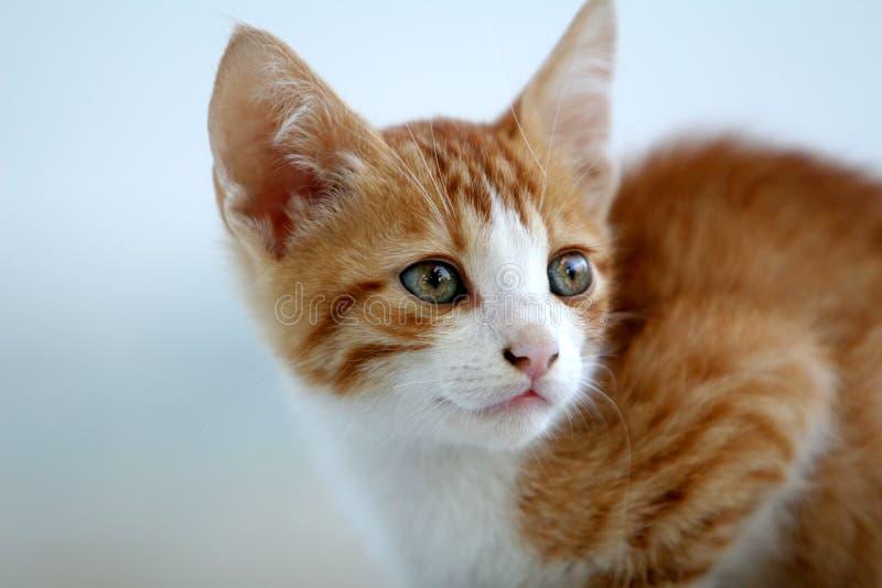 gullig kattunge little som är röd royaltyfri bild