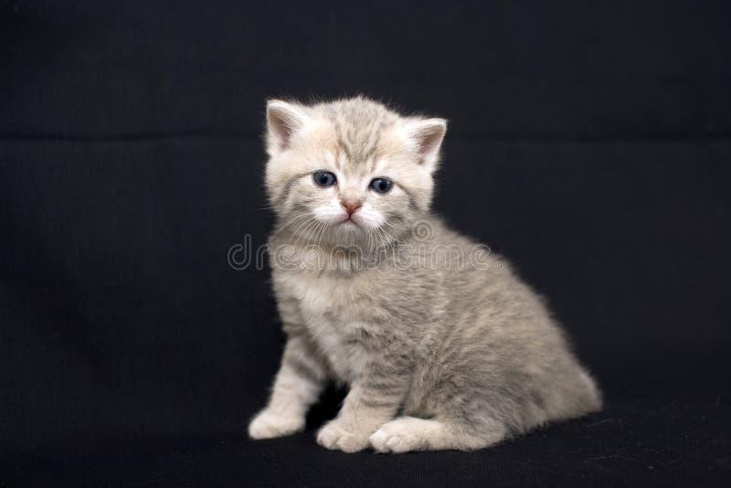 Gullig kattunge på en mörk bakgrund arkivbild