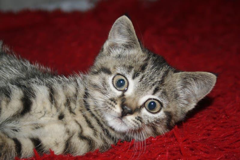 Gullig kattunge som såg först kameran arkivfoto