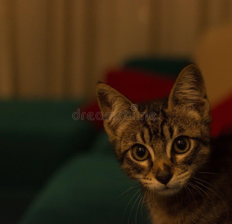 Gullig kattunge som ser kameran royaltyfria foton
