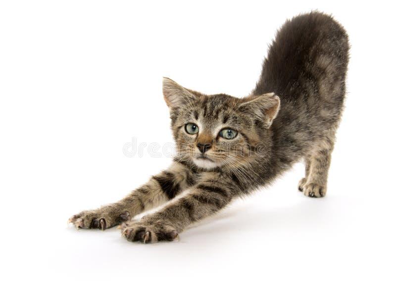gullig kattunge som sträcker tabbyen royaltyfria bilder