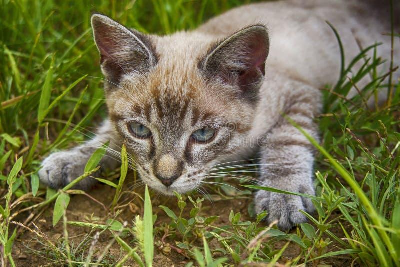 Gullig kattungejakt i gräset royaltyfri fotografi