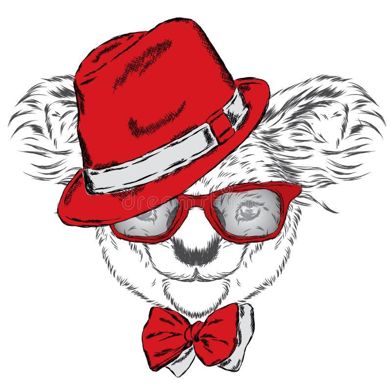 Gullig koala i ett lock och ett band Koalavektor vektor för hälsning för björnkort eps10 australasian Vinter skier Bärande expone royaltyfri illustrationer