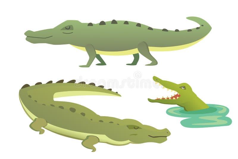Gullig krokodiluppsättning Illustration för alligatorvektortecknad film vektor illustrationer