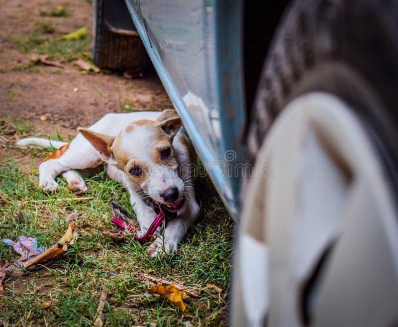 Gullig li& x27; l hund arkivfoto