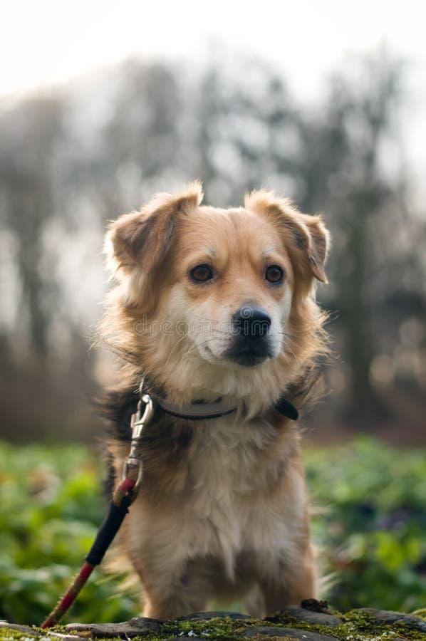 Gullig liten blandad avelhundstående royaltyfria foton