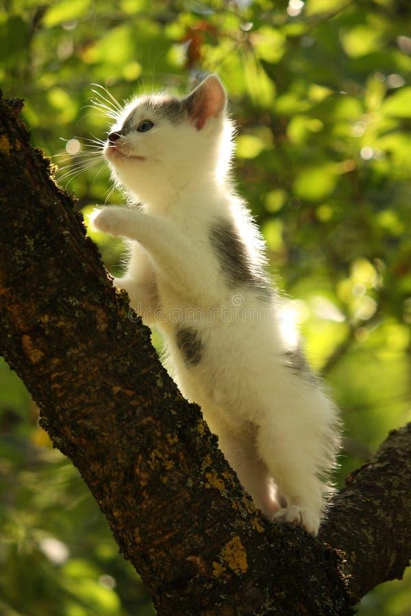 Gullig liten filial för kattungeklättringträd i sommar royaltyfri foto