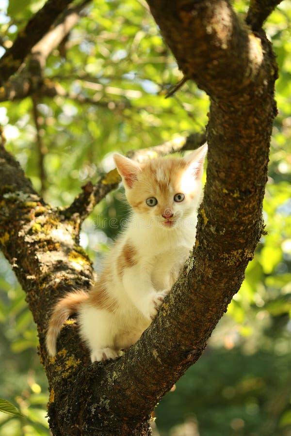 Gullig liten filial för kattungeklättringträd i sommar royaltyfria foton