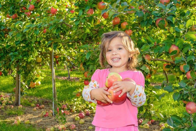 Gullig liten flicka i trädgården med äpplen royaltyfri bild