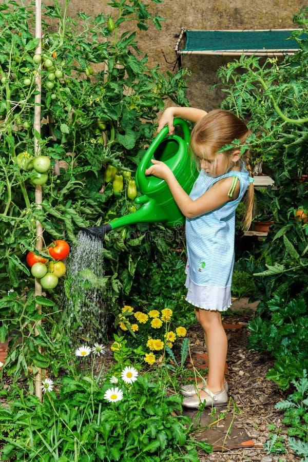Gullig liten flicka som bevattnar tomaten och blommor i trädgården arkivbild