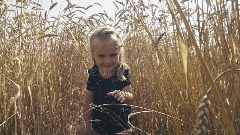 Gullig liten flicka som går till och med vetefält fotografering för bildbyråer