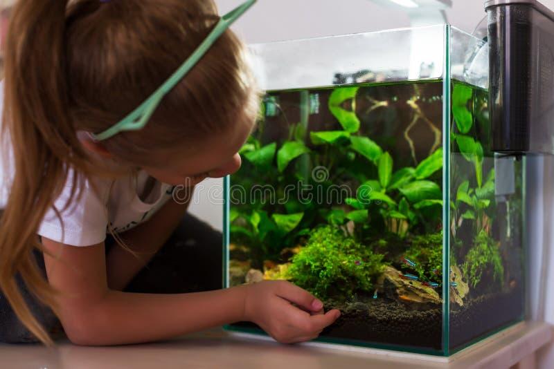 Gullig liten flicka som ser fisken i akvarium royaltyfria bilder