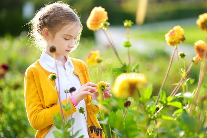Gullig liten flicka som spelar, i att blomstra dahliafältet Barn som väljer nya blommor i dahliaäng på solig sommardag fotografering för bildbyråer