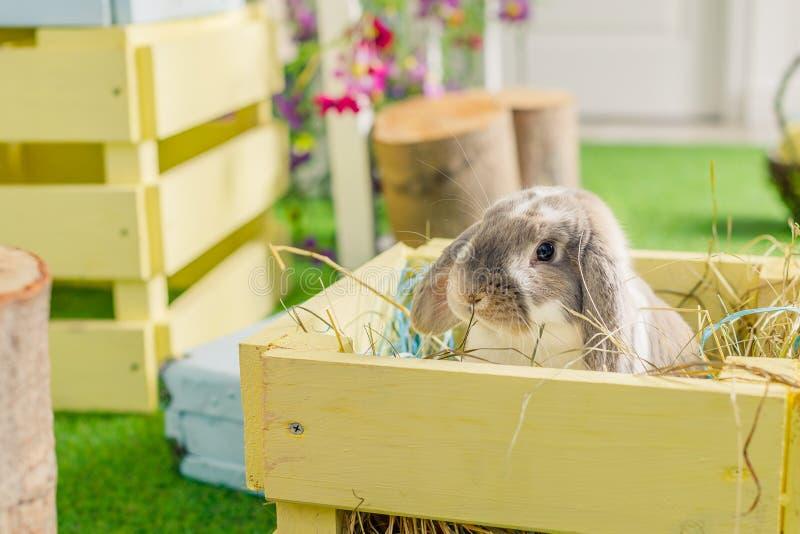 Gullig liten fluffig vit beskär gå i ax kaninkanin som sitter på gräs symboliskt av påsk och vårsäsongen Vår royaltyfri fotografi