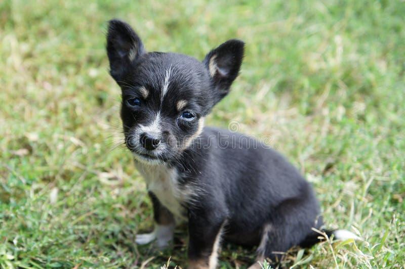 Gullig liten hund - valp arkivfoto