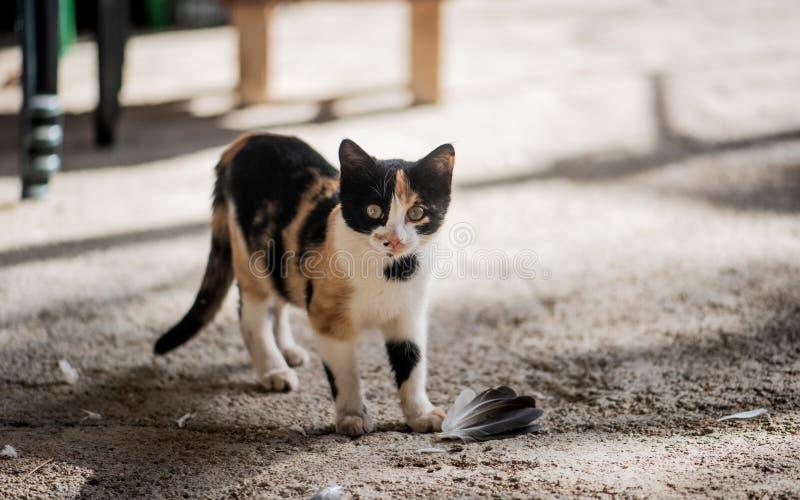Gullig liten kattåtduva Kattungejägare royaltyfri fotografi