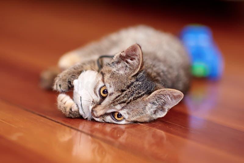 Gullig liten katt av strimmig kattfärglekar på trägolvet med den vita leksakmusen Nätt kattunge med gula ögon hemma royaltyfria bilder