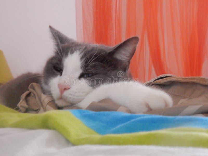 Gullig liten katt på sängen royaltyfri foto