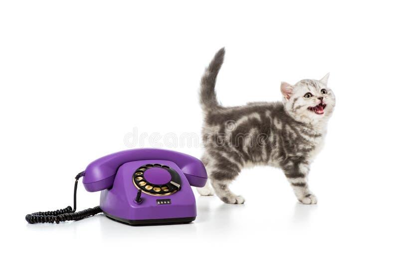 gullig liten kattunge med den purpurfärgade roterande telefonen på vit royaltyfri fotografi