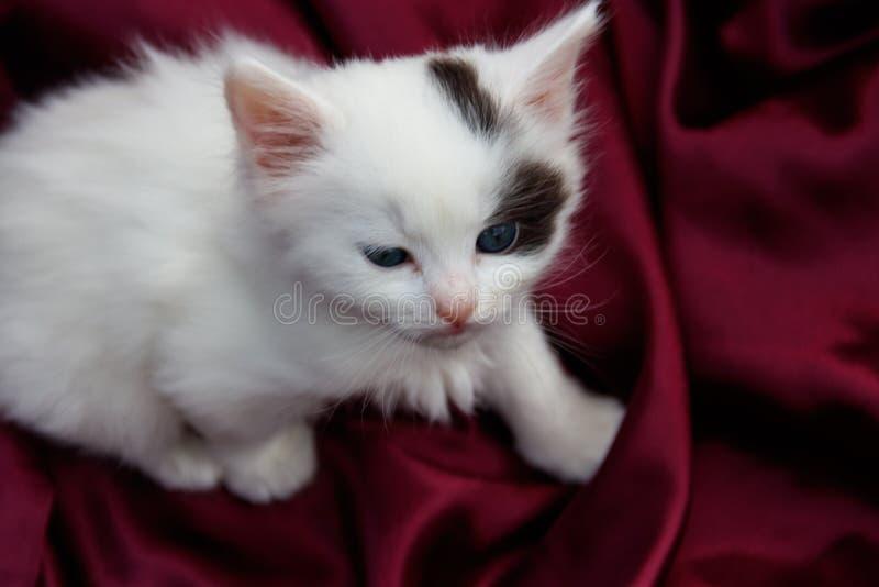 Gullig liten kattunge p? en purpurf?rgad sat?ngtorkduk fotografering för bildbyråer