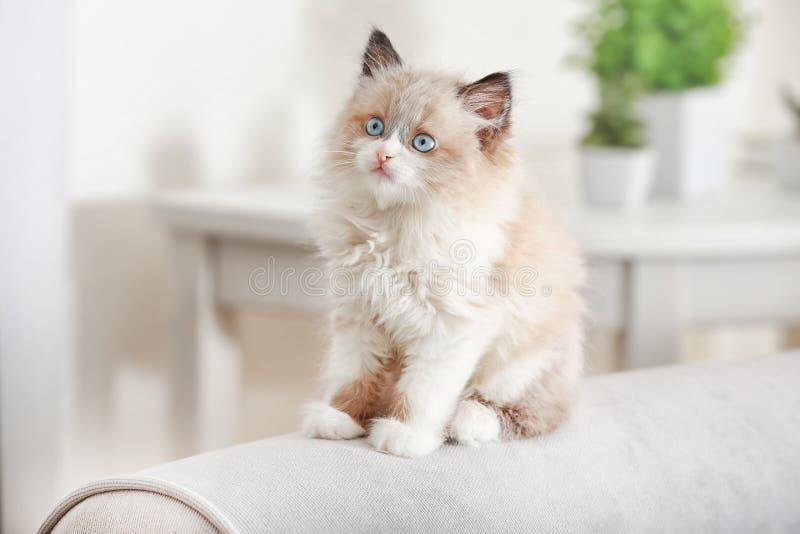 Gullig liten kattunge på soffan royaltyfri foto